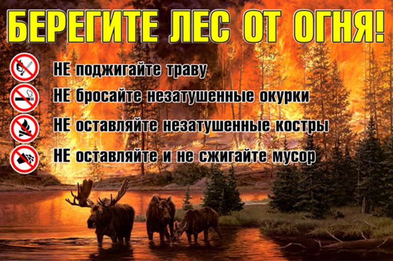 О соблюдении правил пожарной безопасности в лесных массивах