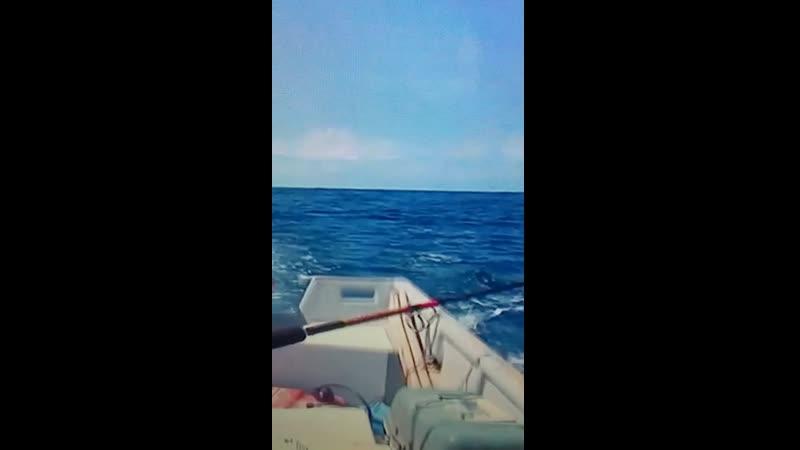 рыбалка и медведи приколы
