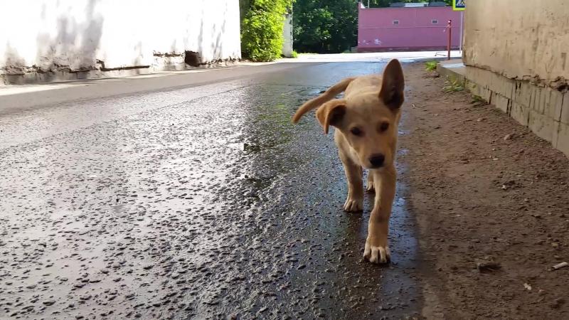 Любопытный щеночек молодой сует нос в камеру) 20170801_093108