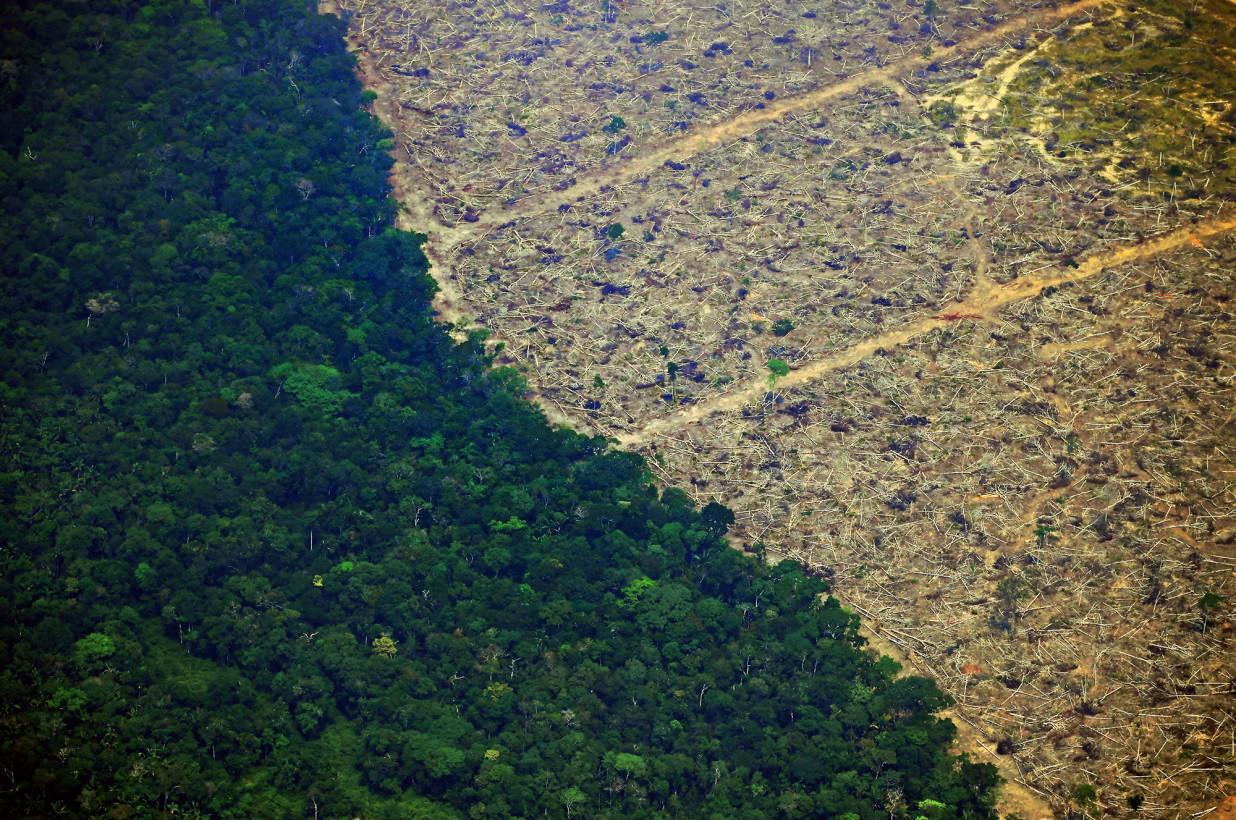 Представьте себе жизнь на Земле без деревьев. Какая она?